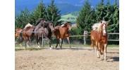 Kone ORAVA